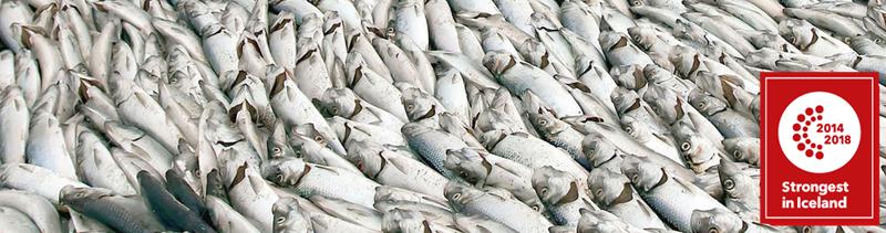 Mynd af Skinnfiskur ehf
