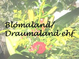 Lógo af Blómaland/Draumaland ehf
